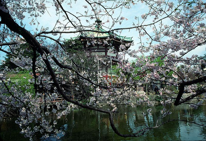 神戸のサプライズプロポーズ 上野恩賜公園