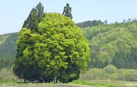 神戸のサプライズプロポーズ トトロの森