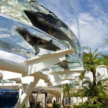 神戸のサプライズプロポーズ サンシャイン水族館