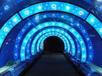 神戸のサプライズプロポーズ 海遊館