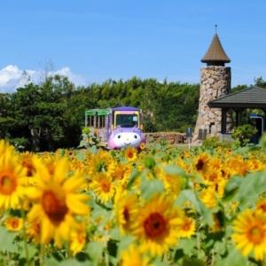 大阪gardenのサプライズプロポーズ イングランドの丘