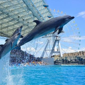 神戸のサプライズプロポーズ 名古屋港水族館