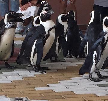 神戸のサプライズプロポーズ 京都水族館