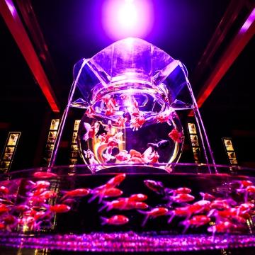 神戸のサプライズプロポーズ アートアクアリウム
