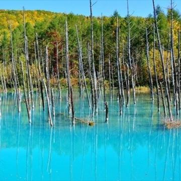 神戸のサプライズプロポーズ 美瑛の青い池
