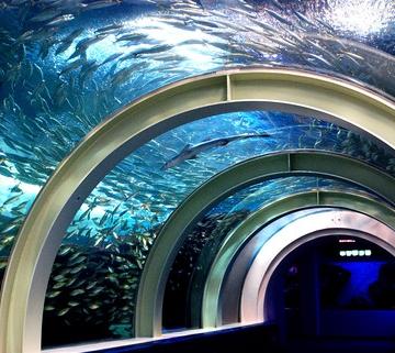 神戸のサプライズプロポーズ 浅虫水族館