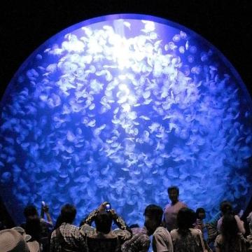 神戸のサプライズプロポーズ 加茂水族館