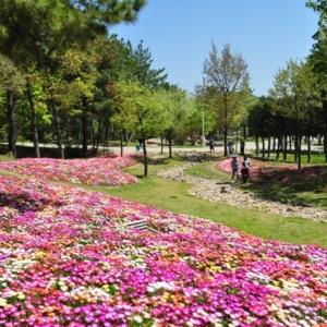 大阪gardenのサプライズプロポーズ 淡路島国営明石海峡公園