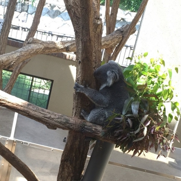 神戸のサプライズプロポーズ 神戸市立王子動物園