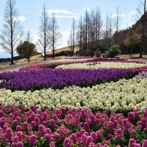 大阪gardenのサプライズプロポーズ 淡路花さじき